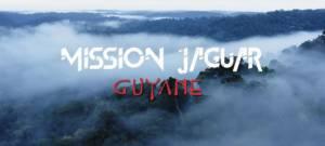 Vue panoramique de la forêt amazonienne en Guyane