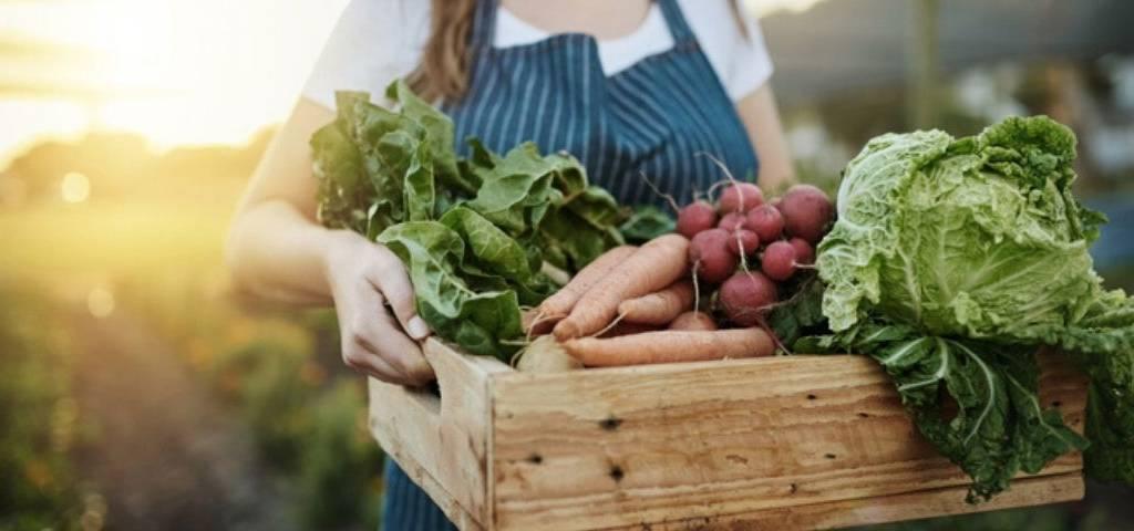 Une agricultrice tient un panier de légume