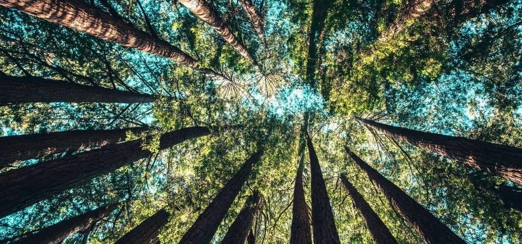 Des arbres et le ciel