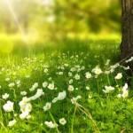 Prairie en fleur