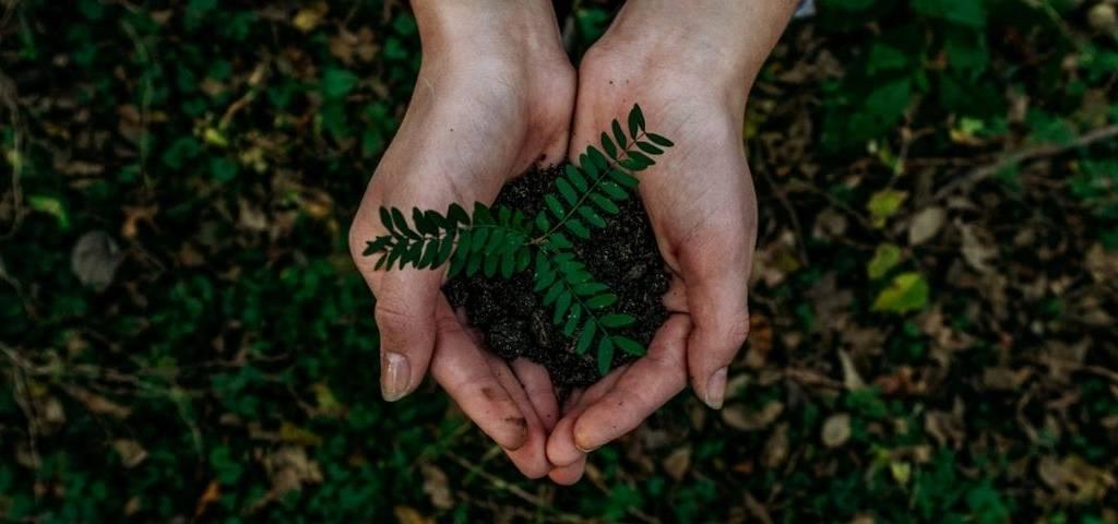 Climat, environnement, main, green