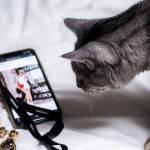 Chat regardant l'application Pinterest sur un smartphone