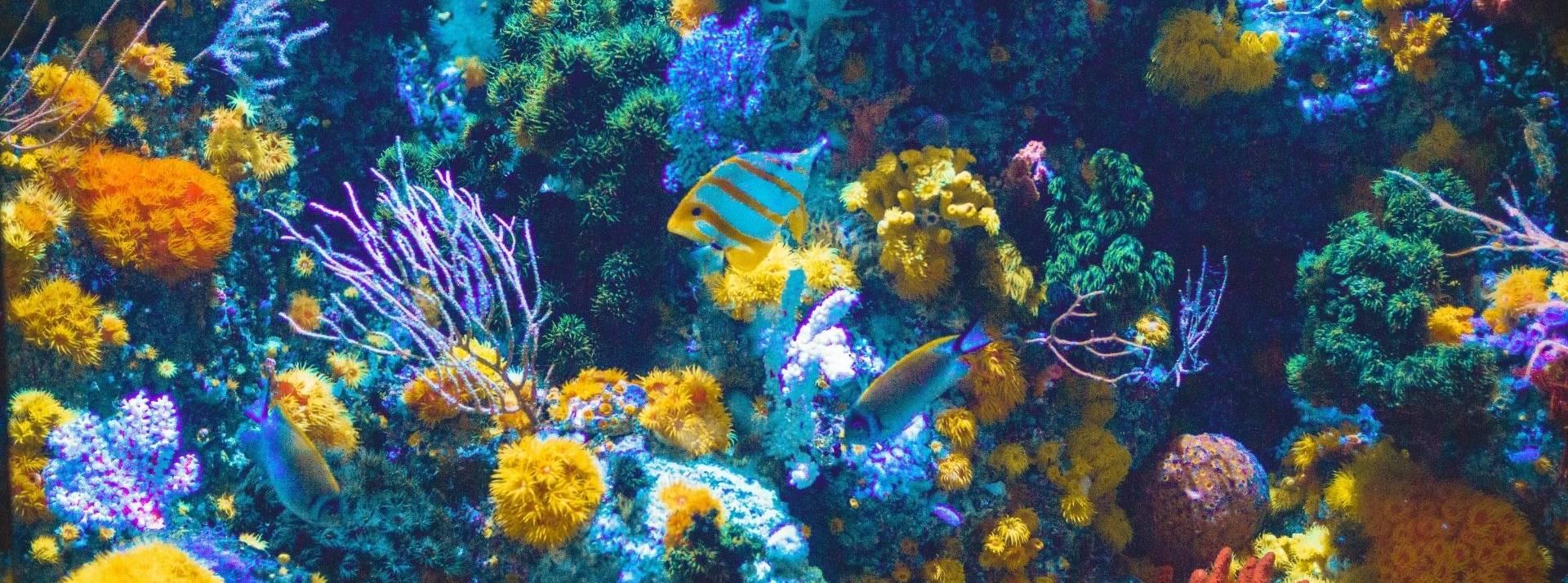 coraux, poissons, océan