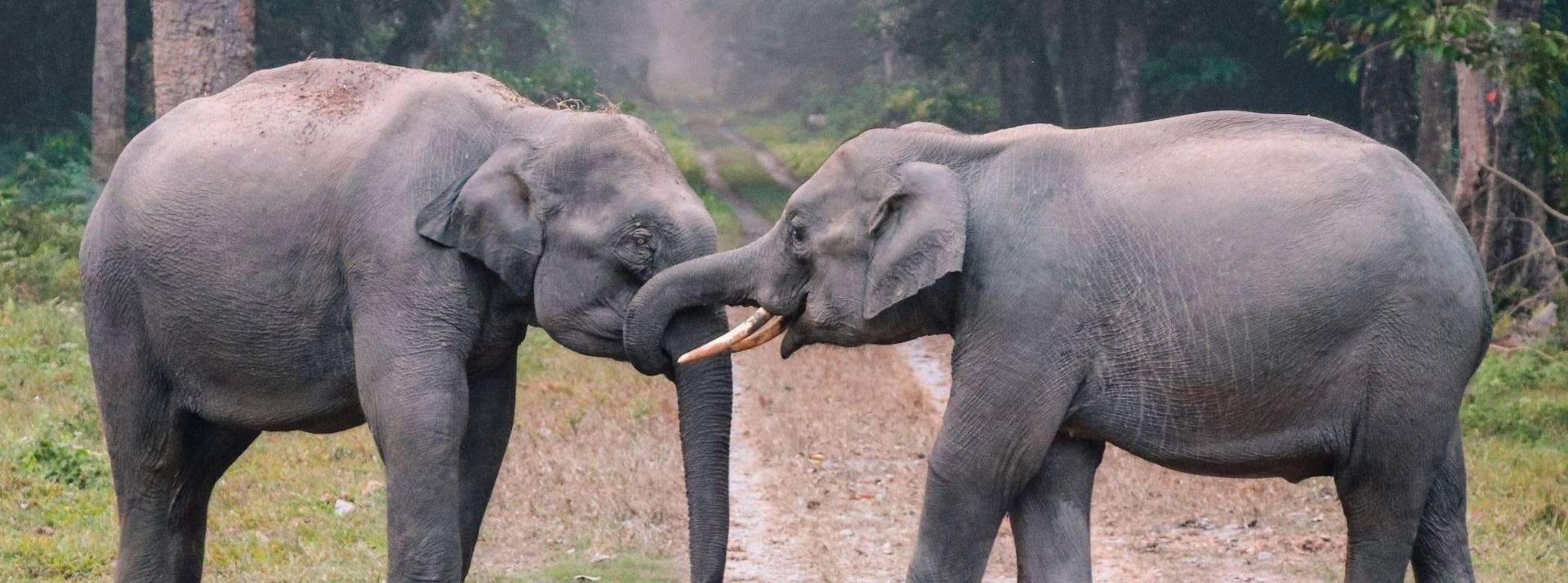 Deux élephants