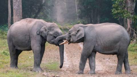 WWF France désigne 10 urgences pour protéger la biodiversité
