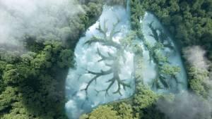 Poumon représenté par des arbres