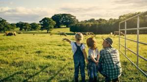 Homme accroupi dans un champ montrant des vaches à deux enfants