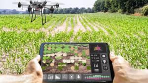 Technologie moderne d'agriculture intelligente à la ferme